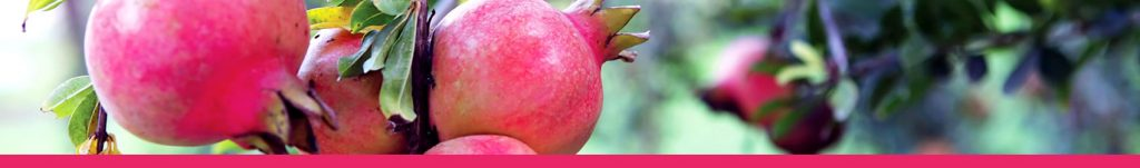 pomegranate-banner-1024x151